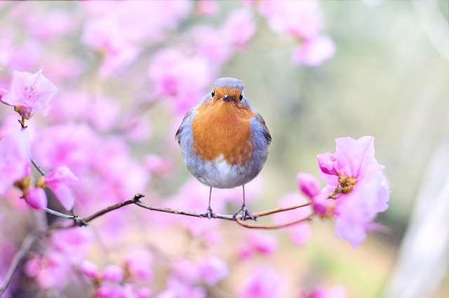 A+robin+sitting+on+a+tree+branch.+