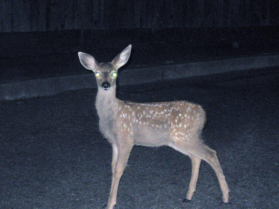 Deer in the Headlines