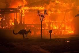 https://www.google.com/search?q=australian+wildfires&rlz=1CADJKF_enUS791US793&source=lnms&tbm=isch&sa=X&ved=2ahUKEwiriPSpt4vnAhXKK80KHSI5AFgQ_AUoAnoECBgQBA&biw=1366&bih=609&safe=active&ssui=on#imgrc=3ljQPw2gMA0yyM: